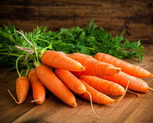 Möhren Samen sehr lange Anbauperiode *Nantaise 2 Milan* Karotten Samen