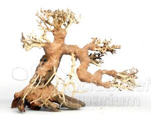 Bonsai Tree Freshwater Aquarium Aquascape Moss Driftwood 12 77500 4 Ebay