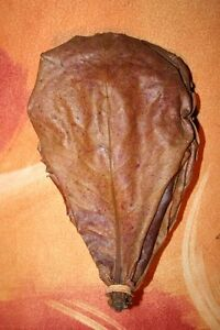 200 Super Feuilles De Catappa Aaa Entretient Aquarium Poisson Crevettes Discus