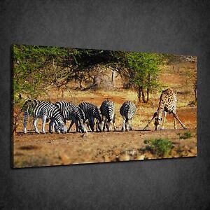 south africa animals at waterhole zebra giraffe canvas print wall
