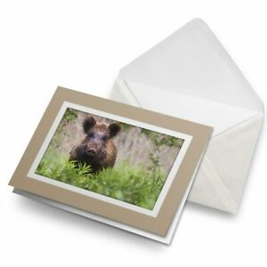 Greetings-Card-Biege-Wild-Boar-Sus-Scrofa-Hog-Pig-Animal-24437