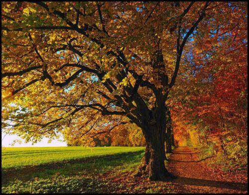 """11 x14 Silver Metallic Art Photograph /""""Farm Road Autumn/"""" Wall Decor Picture Fine"""