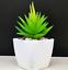 Artificial-Succulent-Plants-Small-Fake-Succulent-Bonsai-Garden-Miniature-Decor thumbnail 10