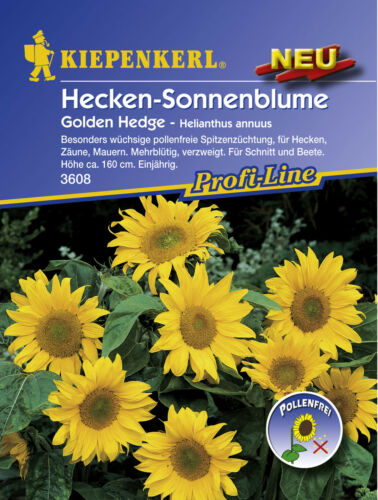 Semences KIEPENKERL haies tournesol Golden Hedge