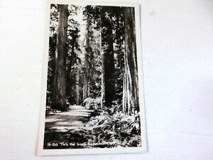 Through-the-Giant-Redwoods-Calif-vintage-RPPC-postcard-14-810