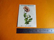 CHROMO 1939 CASINO LES FLEURS MEDICINALES N°175 LE PAVOT