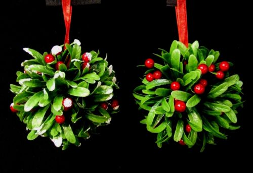 """Begonia /""""double mixte/"""" WPC Prins qualité ampoules//oignons Pack x3"""