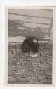 Dog Vintage Plain Back RP Photo Card 440a - Aberystwyth, United Kingdom - Dog Vintage Plain Back RP Photo Card 440a - Aberystwyth, United Kingdom