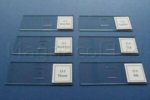 Capable Microscope Diapositives: Diapositives Préparés-spider Pièces-afficher Le Titre D'origine