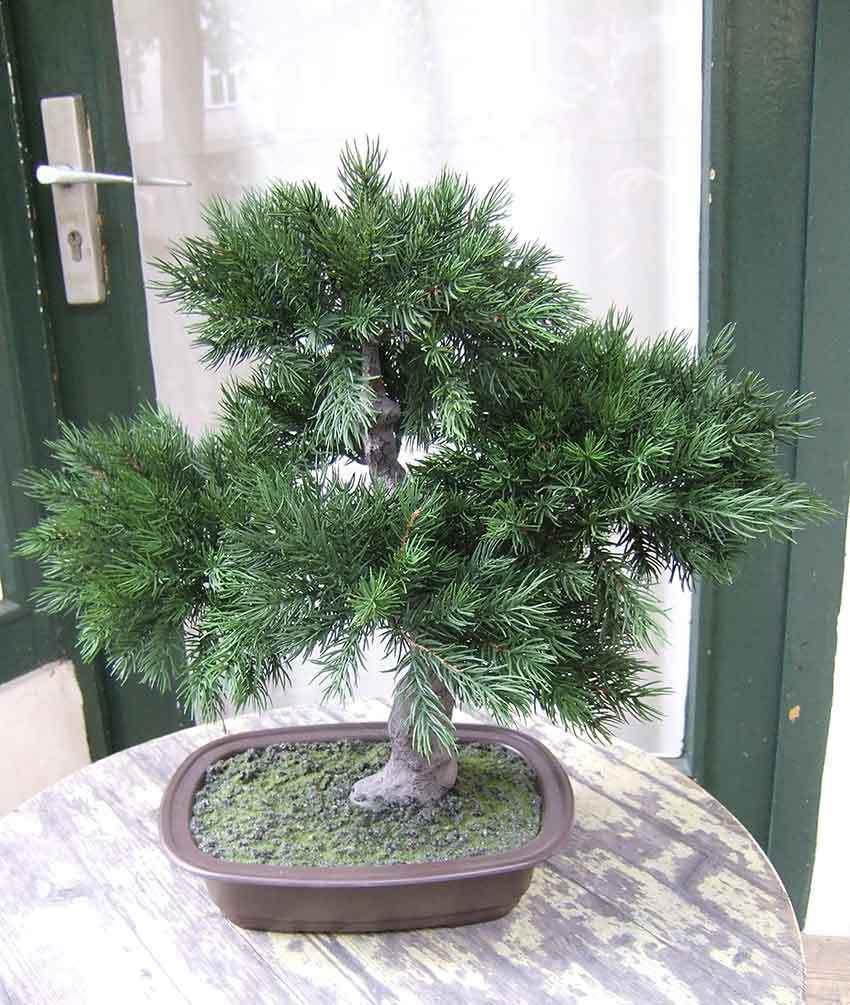 Künstlicher Bonsai- Pinus in Schale ca. 50cm Spitzen Qualität