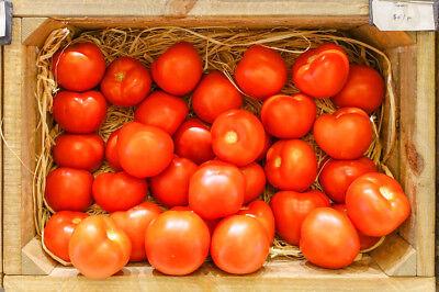 Lycopersicum esc. GIGANTE LISCIO N14 TOMATO SEEDS 15 graines TOMATE GEANTE LISSE