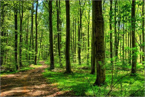 Leinwandbild Frühlingsduft im Wald