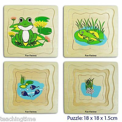 Wooden frog life cycle puzzle - 4 layers