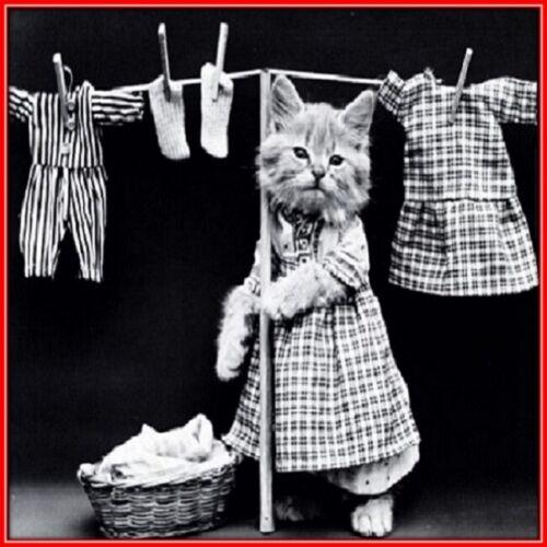 30 Custom Vintage Kitten Laundry Personalized Address Labels