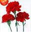200 PCS Seeds Big Red Carnation Bonsai Plants Dianthus Caryophyllus Flowers New