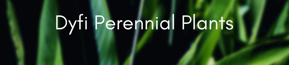 dyfiperennialplants