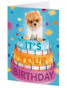 Pomeranian Dog Birthday Cake Surprise Birthday Card Ebay