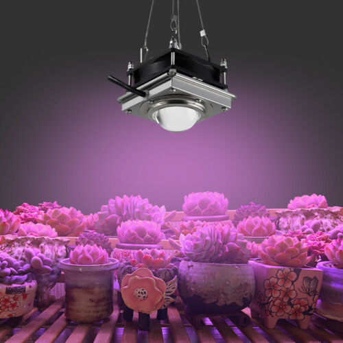 2× 300W Watt COB Led Grow Light Full Spectrum Lamp For Plant Hydroponics Flower