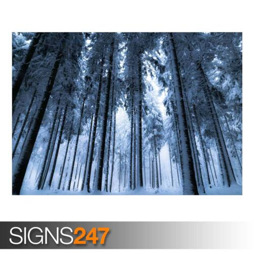 AD939 DEEP WINTER FOREST Photo Poster Print Art A0 A1 A2 A3 A4 NATURE POSTER
