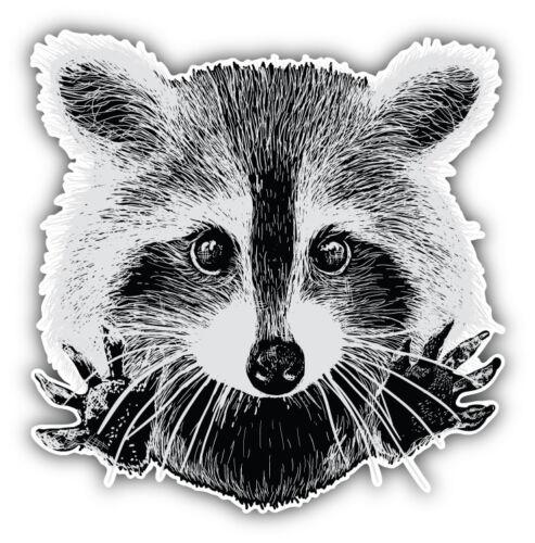 Raccoon Face Sketch Car Bumper Sticker Decal 3/'/' or 5/'/'