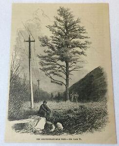 1880-magazine-engraving-ONE-THOUSAND-MILE-TREE-Weber-Canyon-Utah