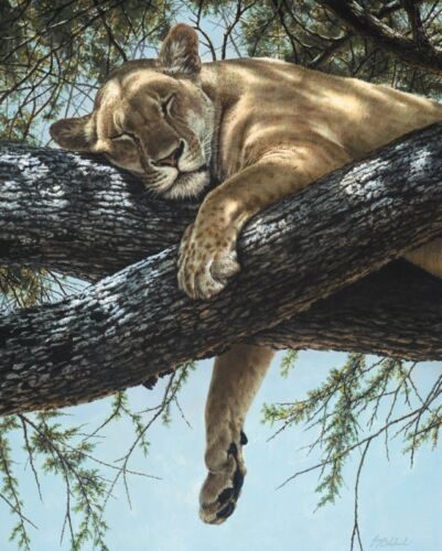 Lake Manyara Lioness by Guy Coheleach 11x14 Lion Poster WILDLIFE ART PRINT