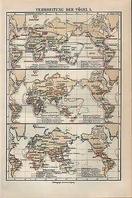 Landkarte Map 1897: Verbreitung Der VÖgel I-iii. Vogel Schnelle WäRmeableitung