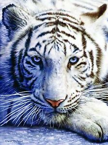 White Tiger Face 1000pc Jigsaw Puzzle by David Penfound