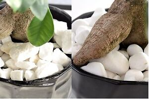 1kg Decorative Natural Marble Stones Pebbles  Extra White *** Home & Garden *** by Ebay Seller