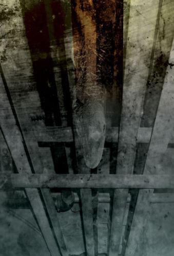 Judgehydrogen 4 11 X 17 Print LOT giger salvador dali surrealism WITH FREE CD