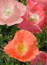 Poppy- Shirley Corn Mix- 1000 Seeds - 50 % off sale