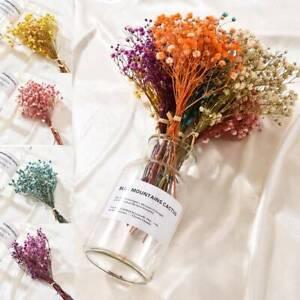 Real Dried Flower Babys Breath Gypsophila Flowers Bouquet Wedding//Home Decor