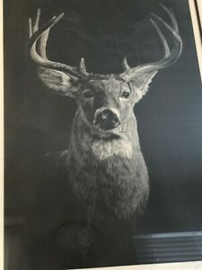 """Dennis Curry Original Etching Print """"The Stag"""" Signed & Numbered, Framed w/COA"""