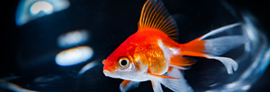 Cleaning and Maintenance Supplies to Keep Your Aquarium Looking Brand New