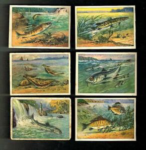 ECHTE WAGNER Album 1  komplette Serie 13 Fische
