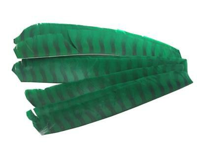 1Natural Turkey Feather Archery Arrow Wing Right Wing 10 Colors 3 4 5 in 36 Pack