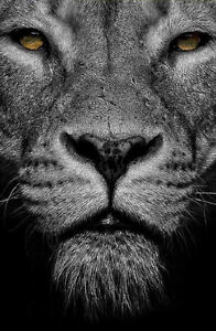 Framed Print - Black & White Lion's Face (Picture Poster ...