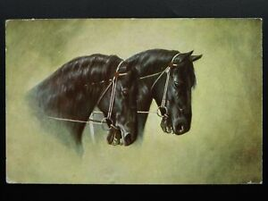 Horse-Theme-PORTRAIT-of-TWO-BLACK-HORSES-c1907-Postcard-by-Max-Ettlinger