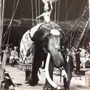 Vintage Photo Barnum Bailey Circus Elephant King Tusk Tommy 80s Show Girl Parade