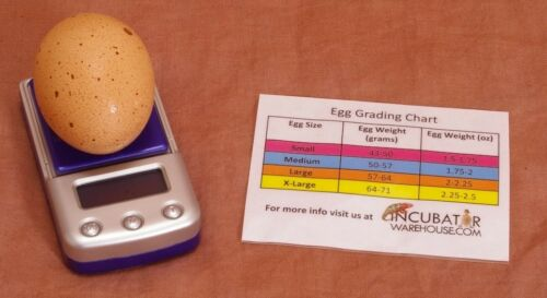 Incubator Scale Digital Egg Scale Measure Humidity Poultry-Chicken-Quail-Duck