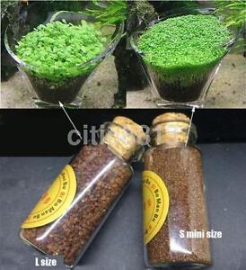 Details about One Bottle Aquarium Grass Seed Carpet Water Aquatic Garden  Plant Grass Seeds AU