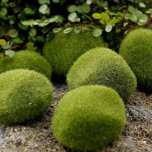 6x Marimo Stone Moss Miniature Dollhouse Garden Craft Fairy Bonsai Plant Decor/'/'