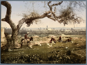 Lydda-Vue-generale-PZ-vintage-photochromie-photochromie-vintage-photochrom