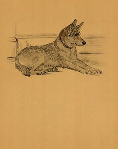 1937-Antique-German-Shepherd-Dog-Print-Lucy-Dawson-German-Shepherd-Art-3567-S