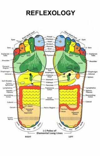 28cm x43cm Reflexology Foot Poster #01 11x17 Mini Poster