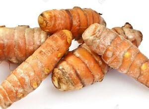 5x Curcuma Jaune Orange rhizome Racine Ampoule Curcuma longa pour la Plantation Plante  </span>