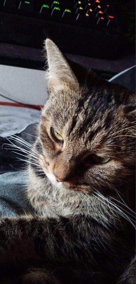 Hunkat, Indekat, 6 år