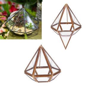 Vertebral Glass Hanging Geometric Terrarium Tabletop Succulent Air