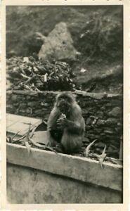 """""""GUENON et son rejeton au Camp des Chênes Algérie 1948"""" Photo originale rkfQvHaU-07183244-460729387"""