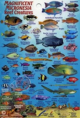 Pohnpei Dive Map /& Coral Reef Creatures Guide Laminated Fish Card by Franko Maps